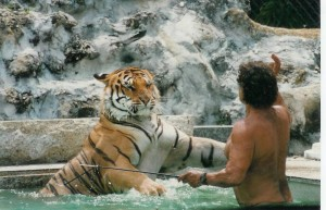Tiger Wincing At Sight Of Whip In Steve Sipek's Hand