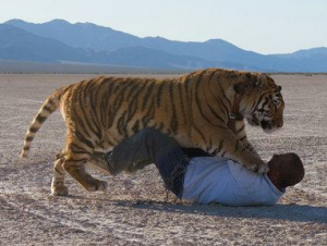 Karl Mitchell All Acting Animals AKA Big Cat Encounters