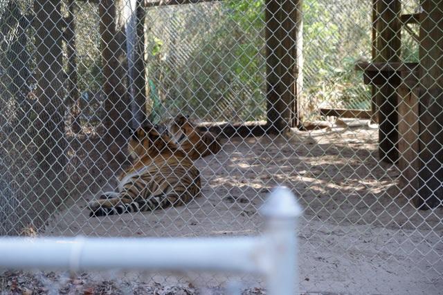 LionsTigersBearsArcadiaFL011017