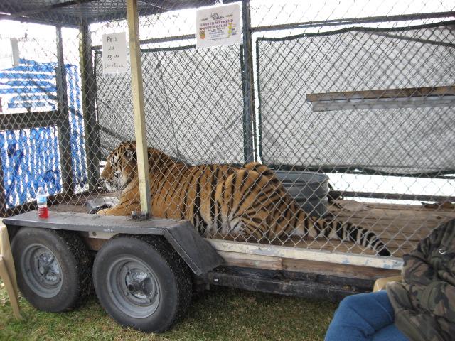 LionsTigersBearsArcadiaFL_3243