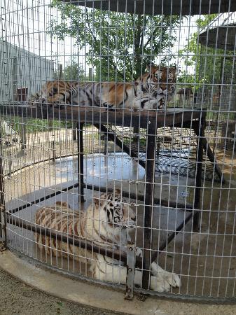 special-memories-zoo