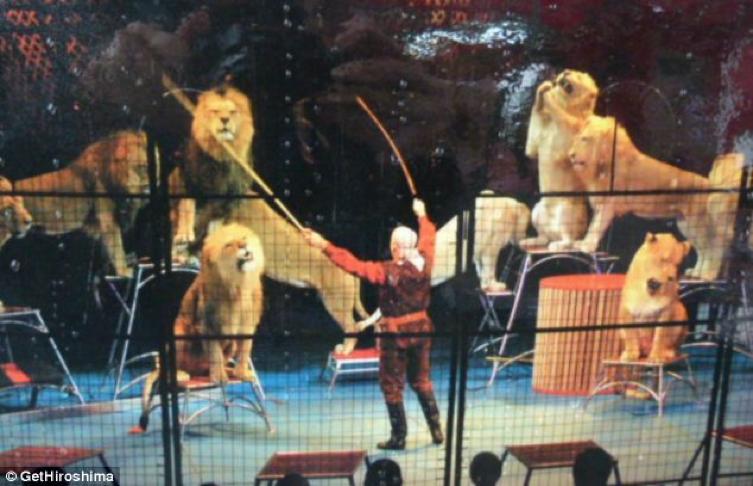 Amazing Animals Japan