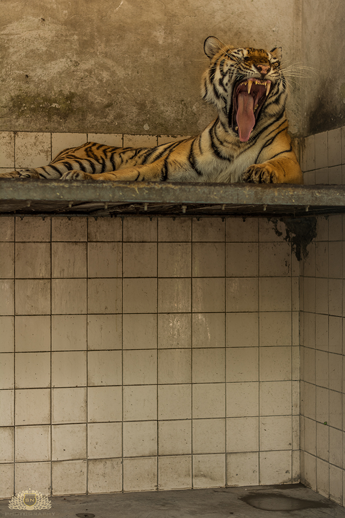 AnimalCruelty-13-web