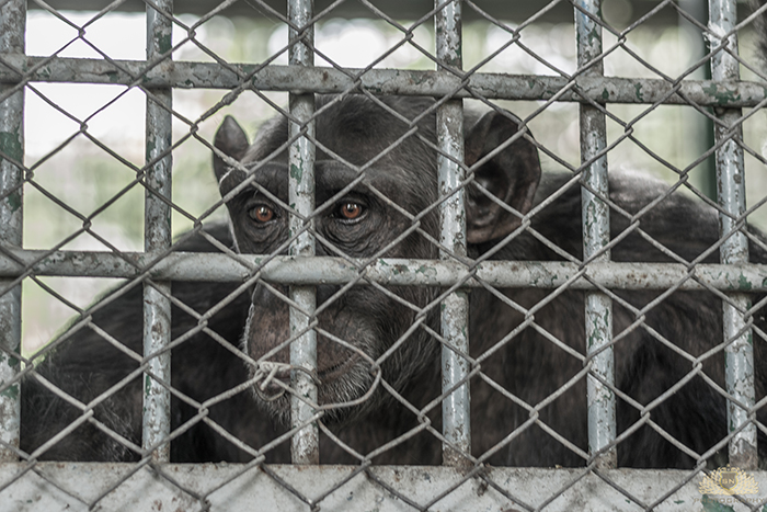 Karachi Zoo Abuse