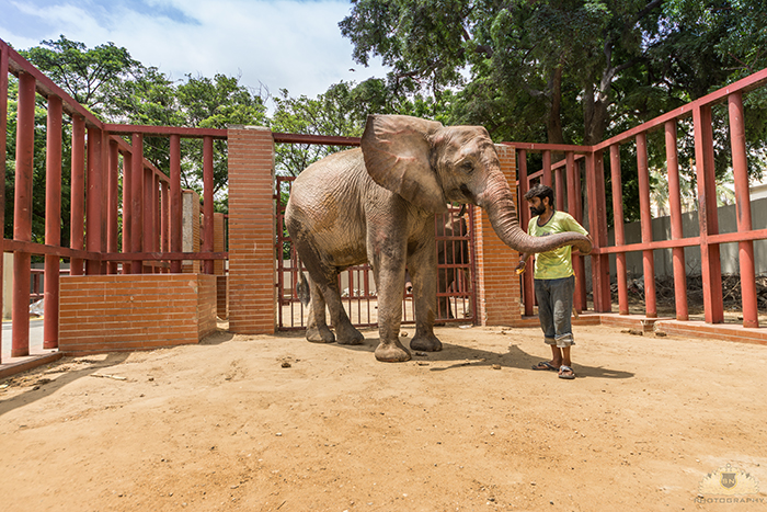 Karachi Zoo Abuse Elephant
