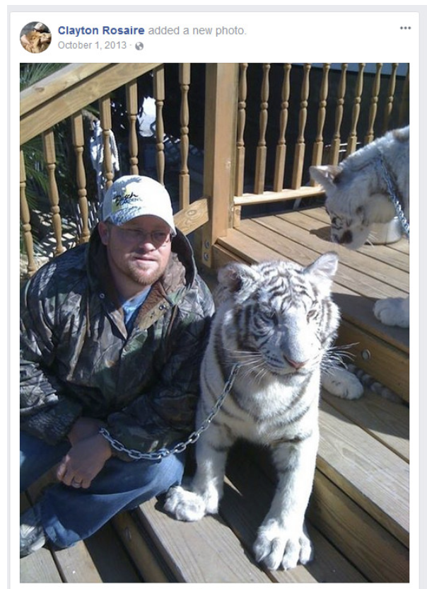 Big-Cat-Habitat-Gulf-Coast-Sanctuary-Kay-Clayton-Rosaire-009
