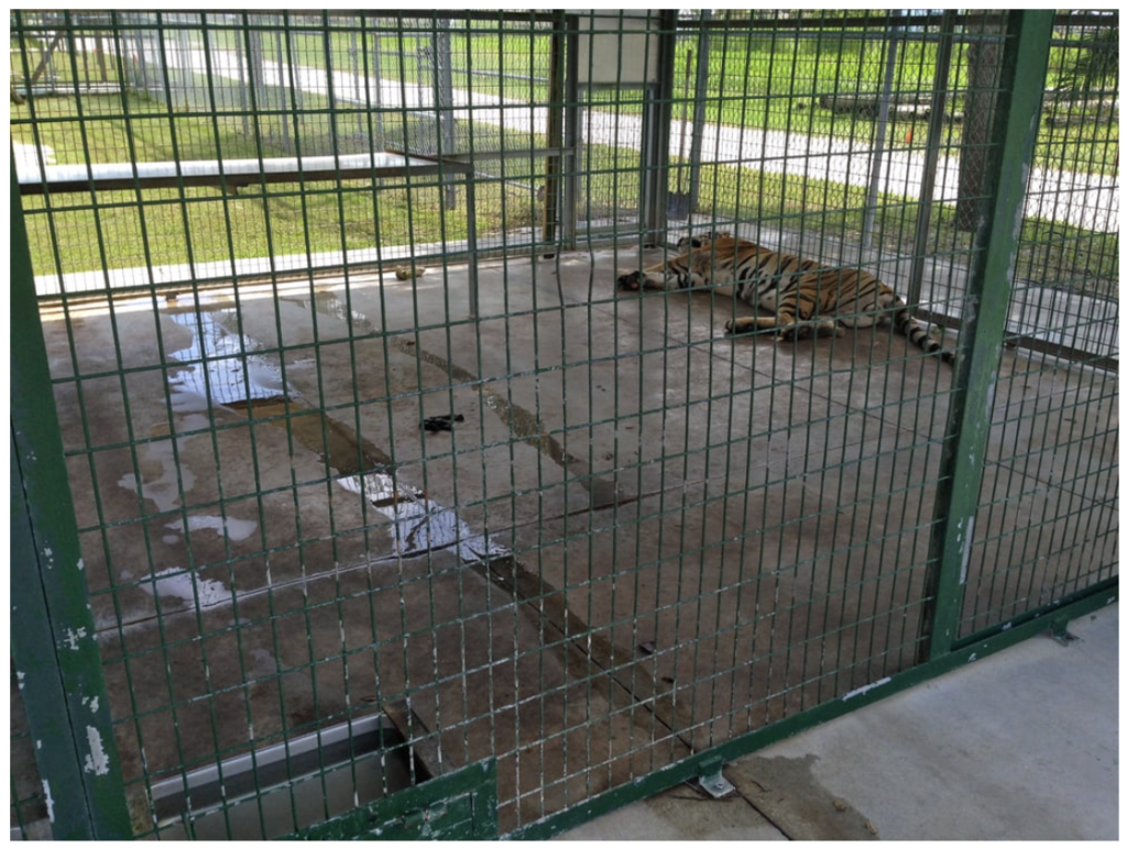 Big-Cat-Habitat-Gulf-Coast-Sanctuary-Kay-Clayton-Rosaire-021