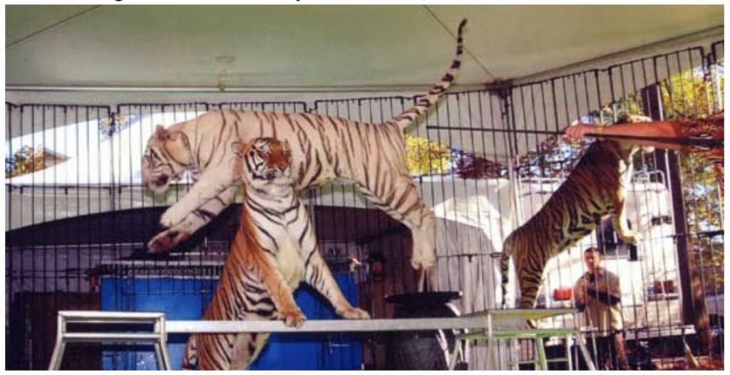 Big-Cat-Habitat-Gulf-Coast-Sanctuary-Kay-Clayton-Rosaire-049