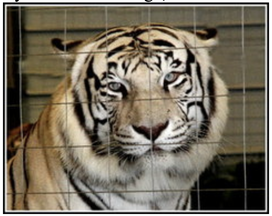 Big-Cat-Habitat-Gulf-Coast-Sanctuary-Kay-Clayton-Rosaire-062