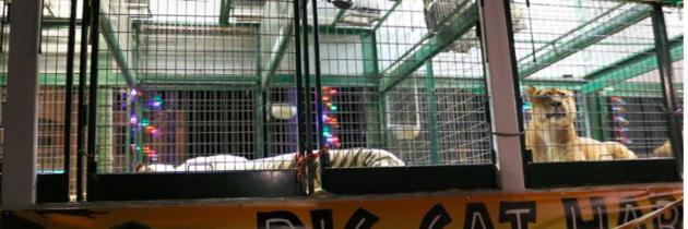 Big Cat Habitat Kay Rosaire Clay Rosaire Circus