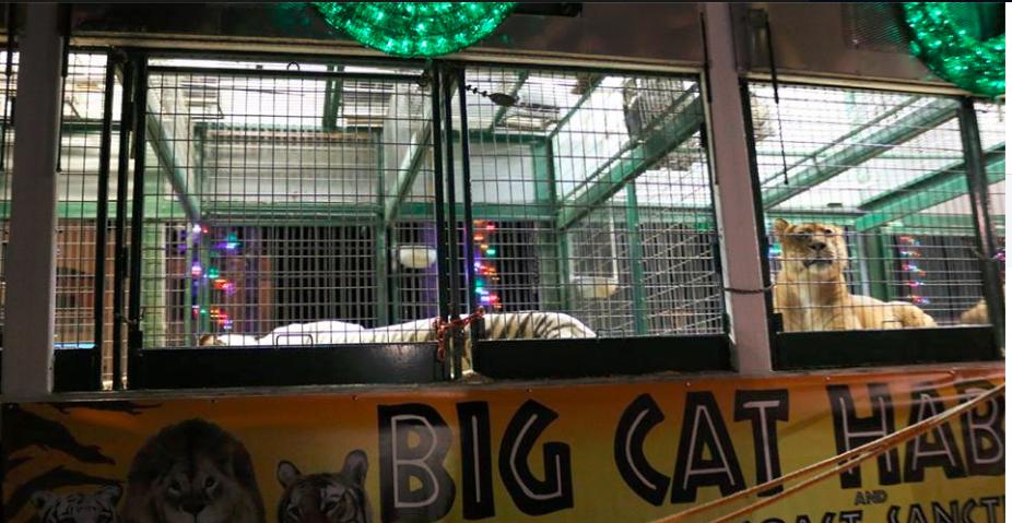big cat habitat exploiting tigers lions