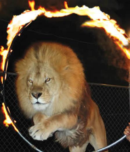 Brian McMillan Lion Fire