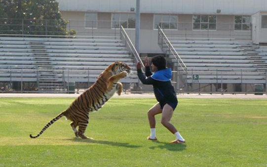 One of Hollywood Animals' tigers in a Nike ad.