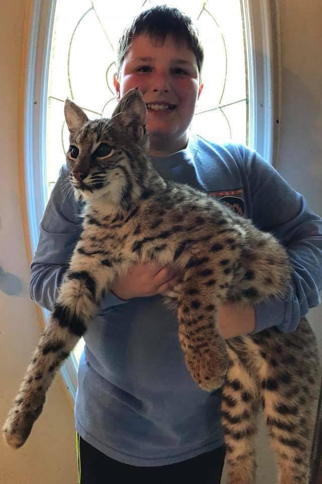 Frazier-Farms-001 boy holding bobcat