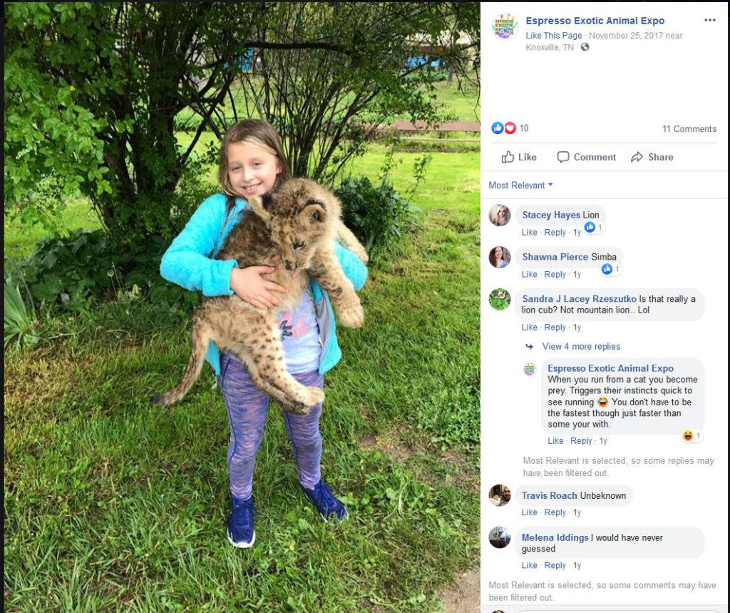 Frazier-Farms lion cub