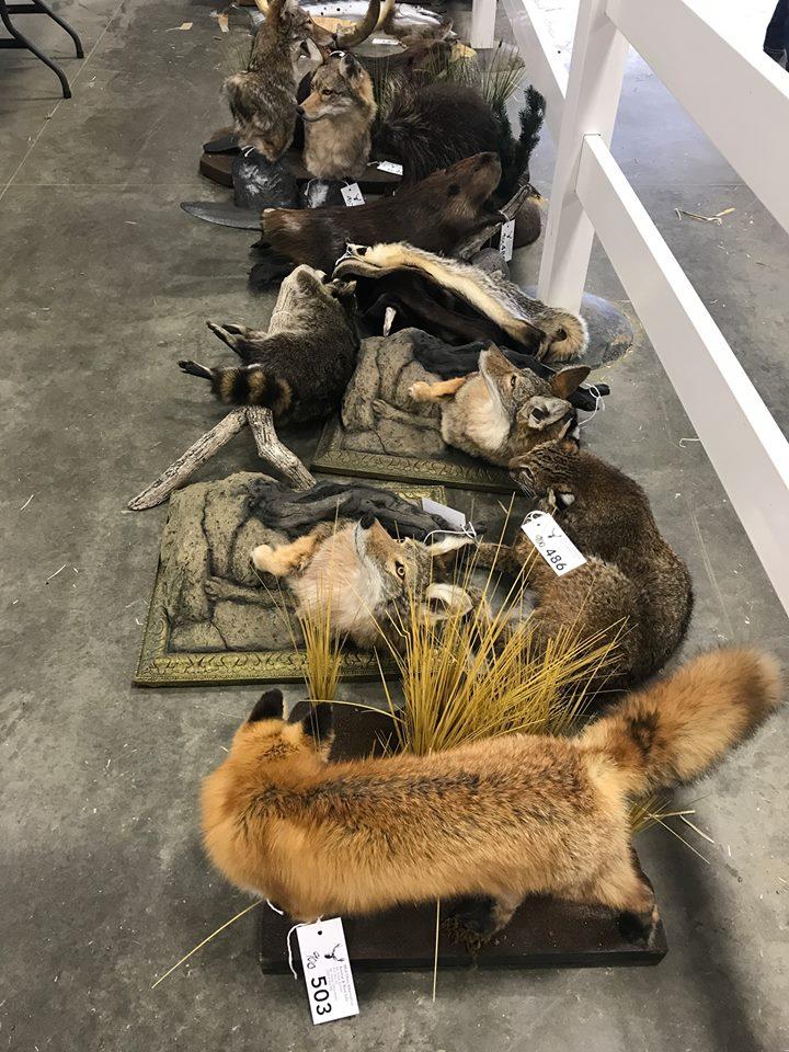 Frazier-Farms taxidermy pets