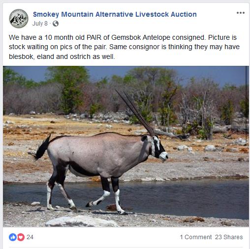 Frazier-Farms Gemsbok Antelope for sale
