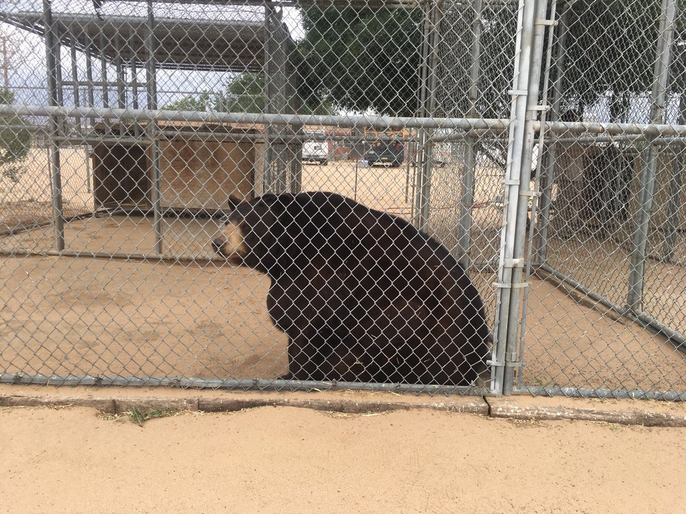 Hesperia-Zoo-abuse-bear