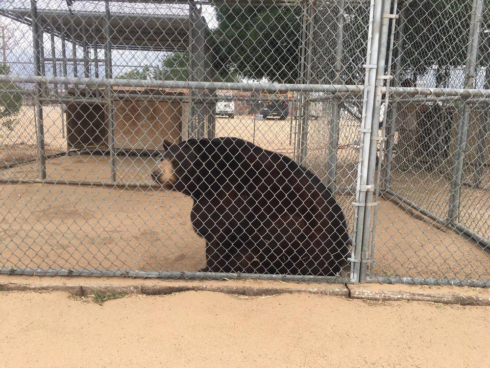 Hesperia-Zoo-abuse-bear