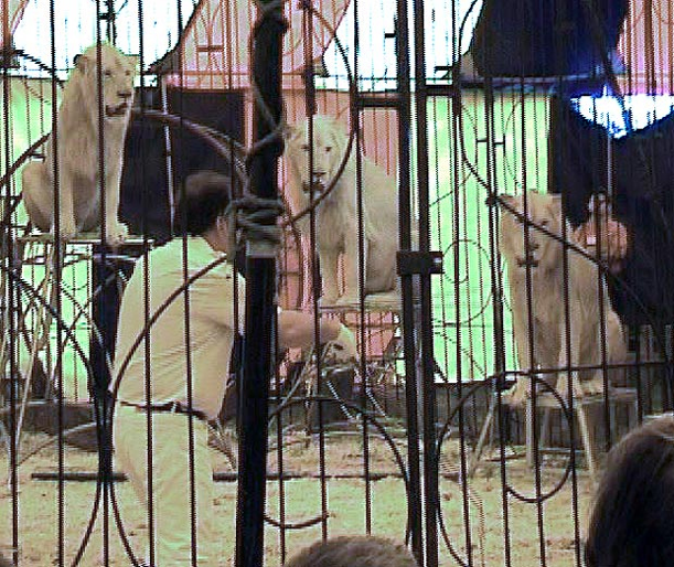 Amazing Animals Jim Clubb's Heythrop Zoological Gardens