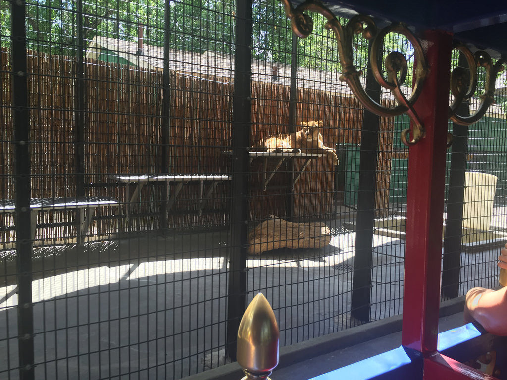 lagoon-park-abuse-lion-enclosure