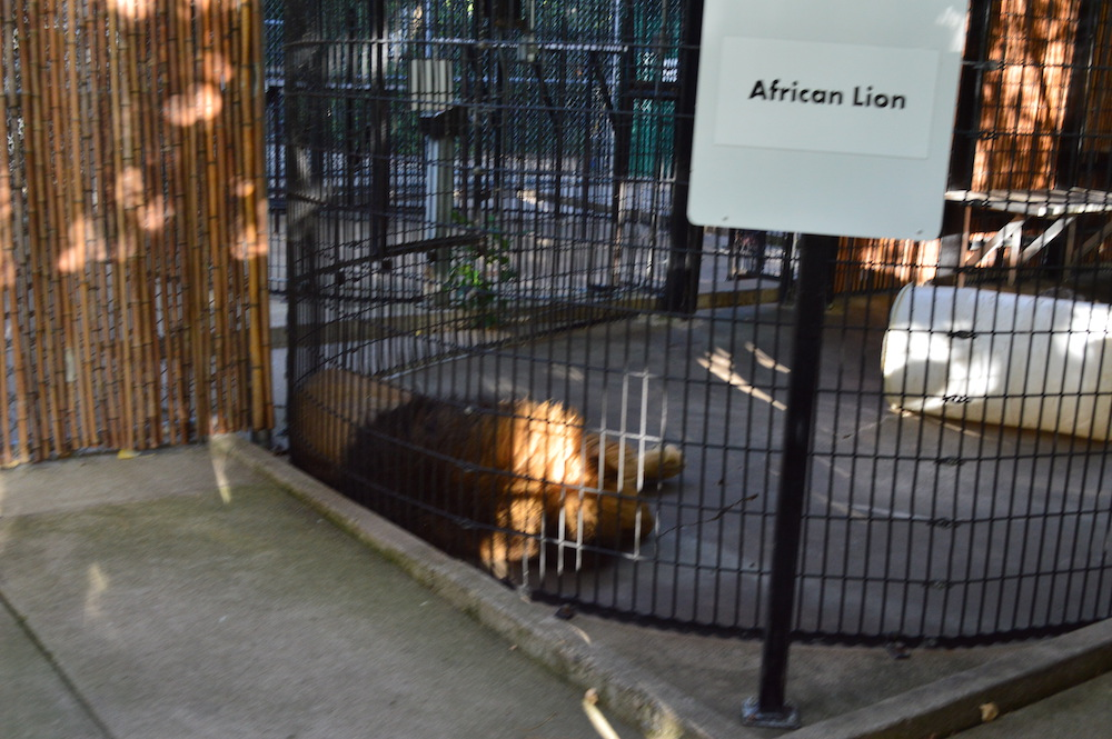 lagoon-park-abuse-lion-cage