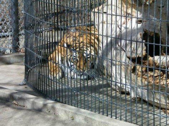 lagoon-park-abuse-sad-tiger