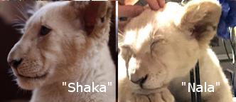 Lena-and-Snowball-Shaka
