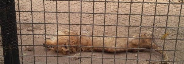 Nigerian Zoo