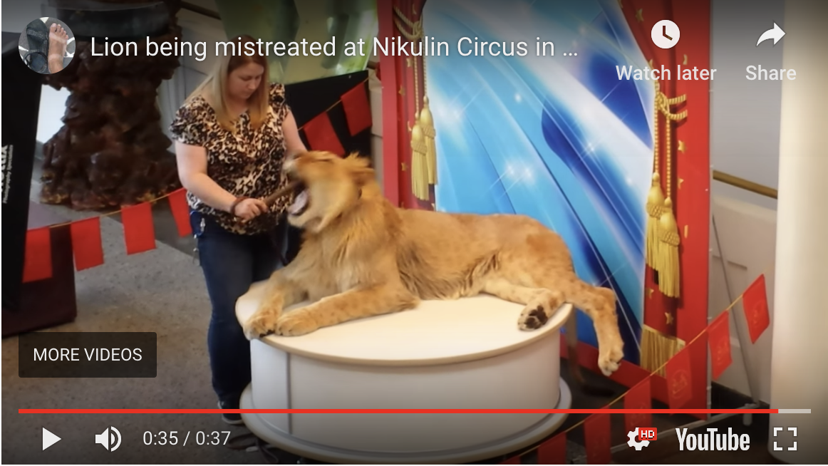 Nikulin Moscow Circus Russia gagging lion cub