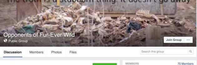 Fur-Ever Wild Teresa Petter