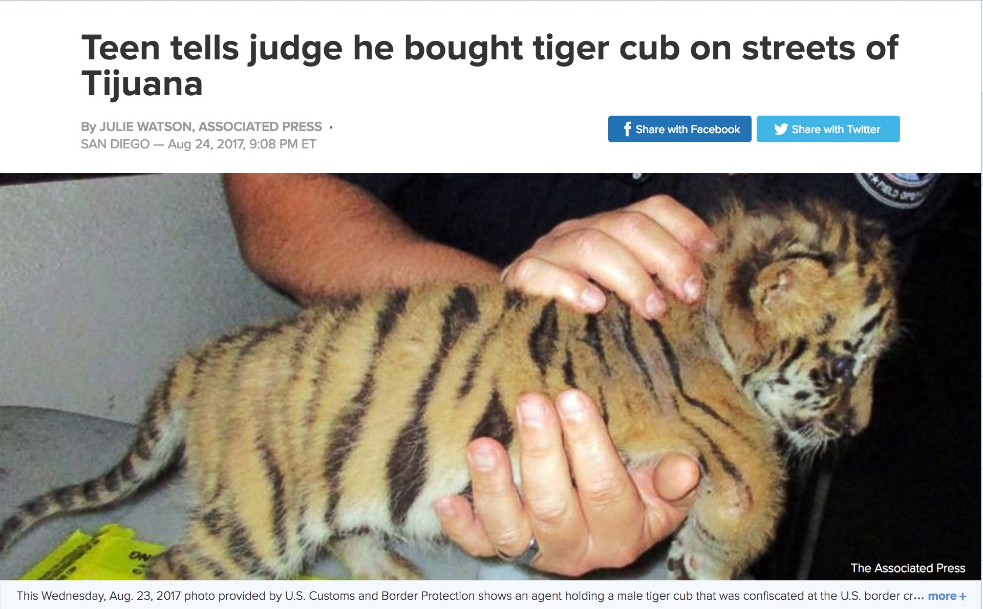 Tiger Cub Smuggled Mexico to California