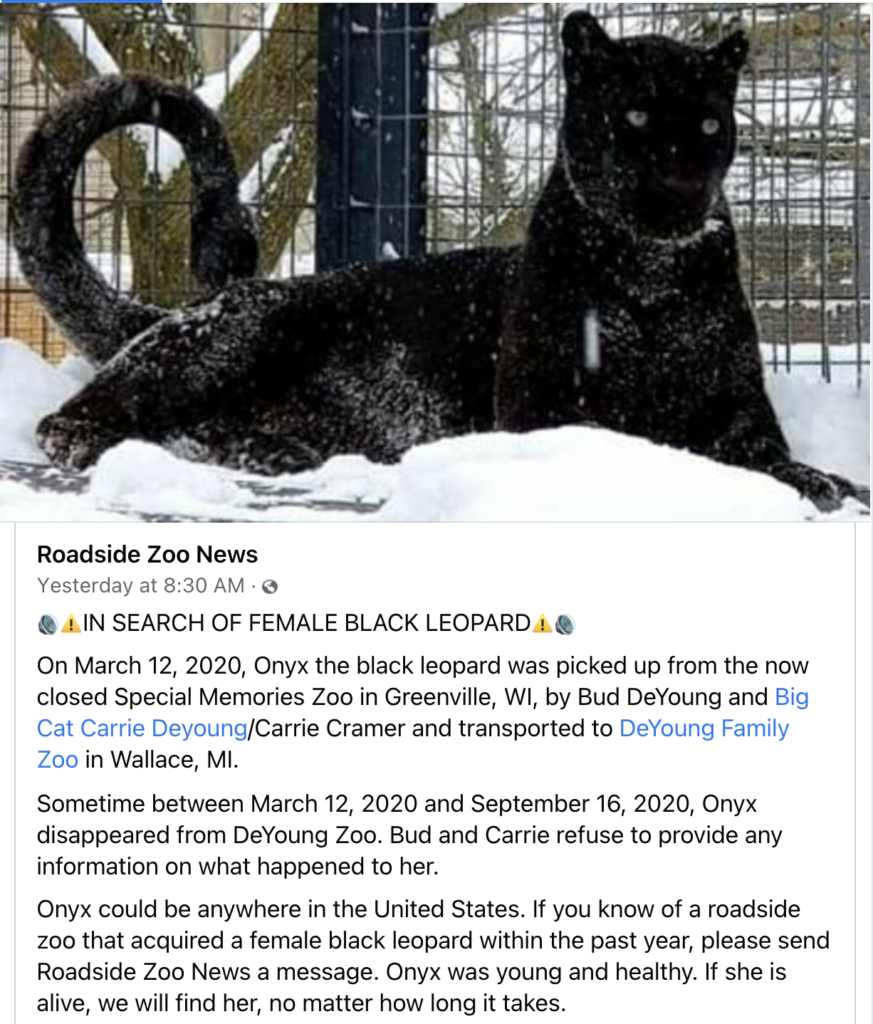 Where is Onyx the black leopard?