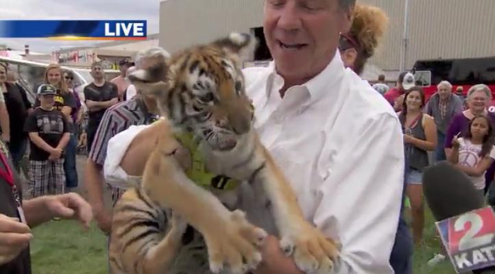 Struggling cub on news A Walk On The Wild Side