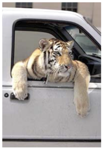 Vernon-Yates-Wildlife-Rescue-and-Rehab-063