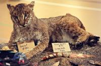 G W  Exotics Animal Foundation Joe Schreibvogel